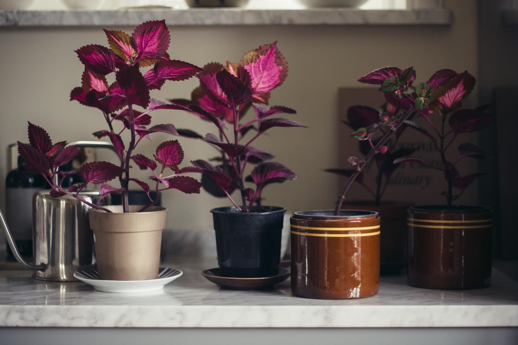 annacate-palettblad